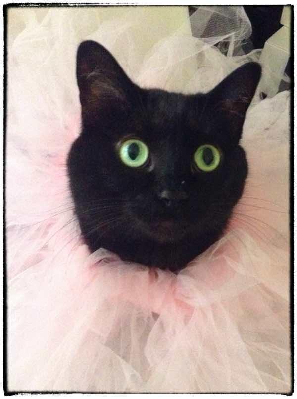 A Cat in a tutu