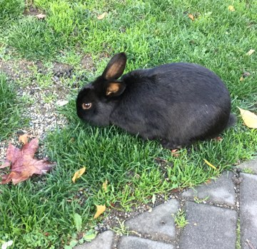 A Rabbit in Langley